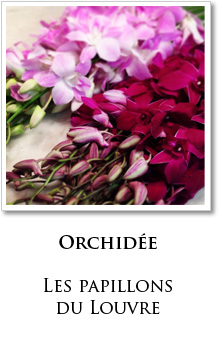 orchidee paris fleuriste